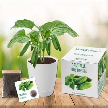 Salatalık Yetiştirme Kiti